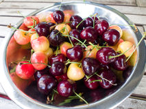 Red and White Cherries. Cherries in the metal bowl Royalty Free Stock Photography