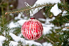 Red and white Christmas ball hanging on a tree Royalty Free Stock Photos