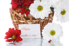 Red and white chrysanthemums in a basket Royalty Free Stock Photography