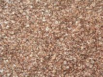 Finger millet flakes. Red and white color dry finger millet flakes stock photography