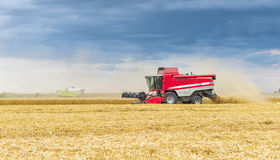 Red and white combine harvesting Stock Photography