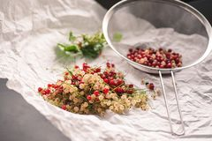 Red and white currant berries being cleaned Stock Photos