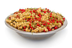 Red and white currant in the big metal plate. Royalty Free Stock Images