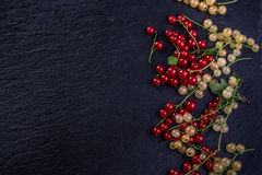 Red and white currant on black background Stock Photos