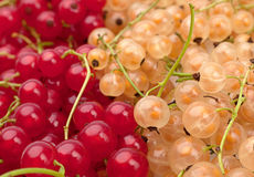 Red and white currant Stock Photos