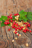 Red and white currant and green leaves on wooden background. Royalty Free Stock Images