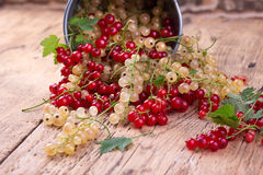 Red and white currant Royalty Free Stock Image