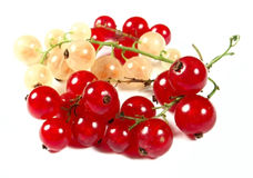 Red and white currants stock photography
