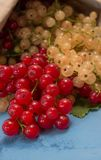 Red and white currants on a blue board Stock Photography