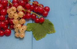 Red and white currants on a blue board Royalty Free Stock Photos