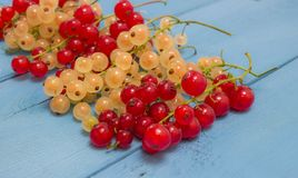 Red and white currants on a blue board Royalty Free Stock Image