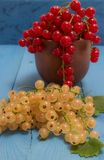 Red and white currants on a blue board Stock Images
