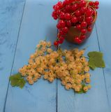 Red and white currants on a blue board Royalty Free Stock Photo