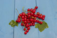 Red and white currants on a blue board Stock Photos