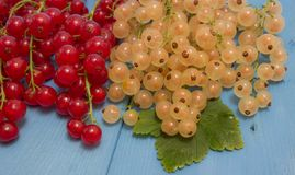 Red and white currants on a blue board Stock Photo