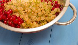 Red and white currants on a blue board Royalty Free Stock Photography