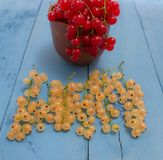 Red and white currants on a blue board Royalty Free Stock Images