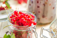 Red white currants gooseberries jars preparations Stock Image
