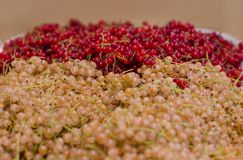 Red and white currants on the market royalty free stock image