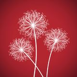 Red and white dandelion Stock Photo