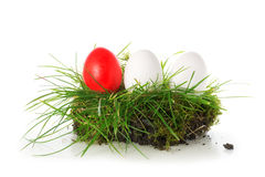 Red and white eggs in a piece of turf, easter decoration isolate Royalty Free Stock Photos