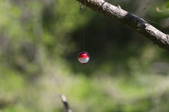 Red and White Fishing Bobber Hanging in Tree Royalty Free Stock Photo