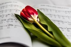 Red and White Flower on Music Note Royalty Free Stock Photos