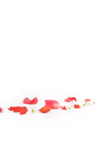 Red and white flower petals. Scattered flower petals on a white background Stock Images