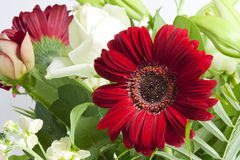 Red and white flowers Stock Photo