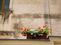 Red and White Flowers in Box on Wall Royalty Free Stock Photography
