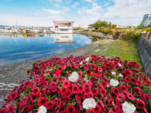 Red and white flowers decorate the seaside walk in Sidney, Vancouver Island, British Columbia to celebrate Canada 150 anniversary stock images