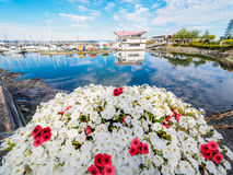 Red and white flowers decorate the seaside walk in Sidney, Vanco Royalty Free Stock Image