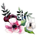 Red and white flowers. Isolated flower illustration element. Background set. Watercolour drawing aquarelle bouquet. Red and white flowers. Floral botanical royalty free illustration