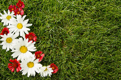 Red and white flowers on grass Stock Photos