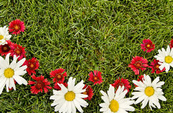 Red and white flowers on grass Stock Images