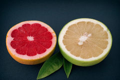 Red and white grapefruits Stock Photography