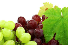 Red and white grapes Stock Image