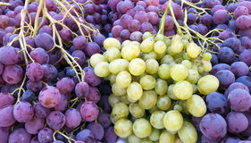 Red and white grapes Stock Images