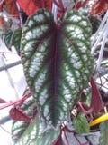 Strange leaf Royalty Free Stock Photography