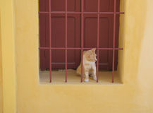 Red and white hair cat on the window Stock Image
