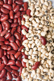 Red and white haricot beans Royalty Free Stock Images