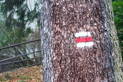Red and white hiking trail signs symbols on the tree in the forest Royalty Free Stock Photos