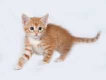 Red and white kitten going on gray Royalty Free Stock Image