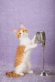 Red and white kitten holding onto vintage fake microphone on stand Stock Image