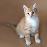 Red and white kitten sitting on brown. Background Royalty Free Stock Photo