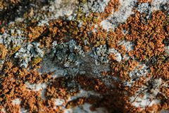 Lichen on a stone, closeup, mushrooms, pattern stock images