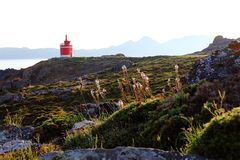 Red and white lighthouse in Punta Robaleira Galicia, Spain, flowers in the foreground. royalty free stock image