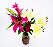 The red and white lilies Stock Photo