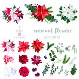 Red, white and marbled poinsettia flowers, hydrangea, peony, dah. Lia, orchid, red succulent, fir branch and mix of seasonal plants and herbs big vector stock illustration