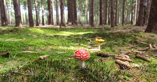Red and White Mushroom Beside Yellow Mushroom Near Green Trees during Daytime Stock Photos